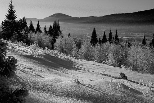 Siberia_mulablanca