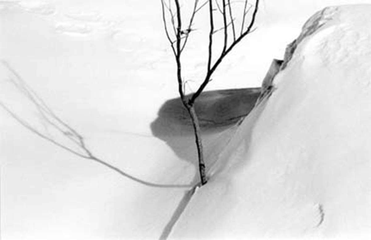 Trees in snow | Abbas Kiarostami